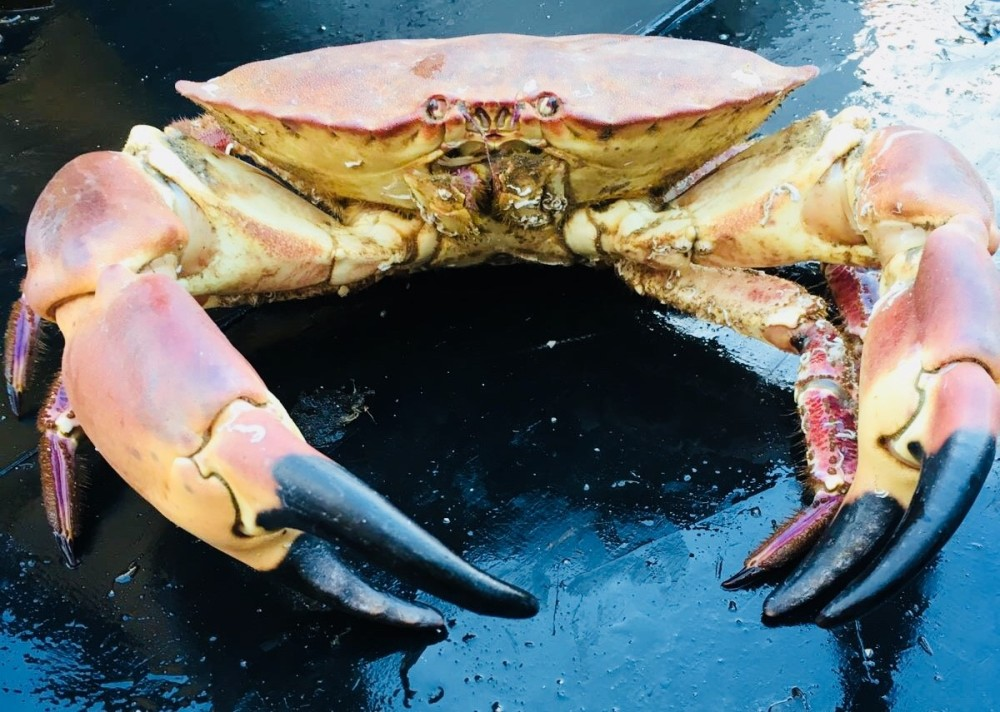 crab whole